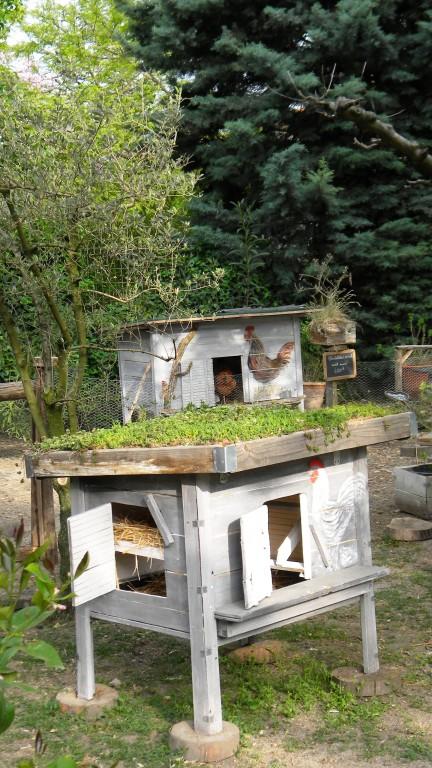 Poulailler avec toit v g talis mon poulailler for Maison avec toit vegetal
